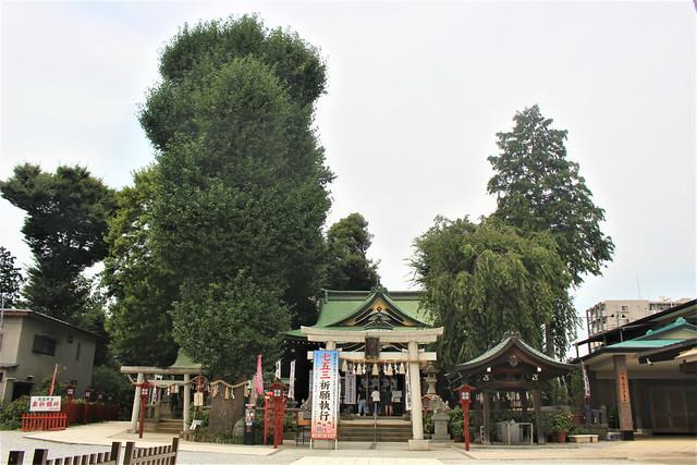 kawagoehachiman-gosyuin013