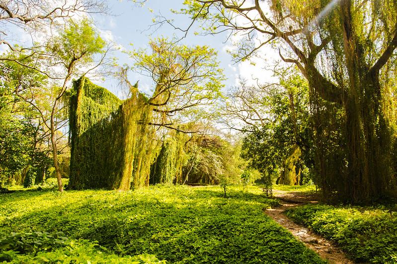 Havana Forest