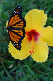 2nd Place - Heather Priestap - Butterfly on Flower