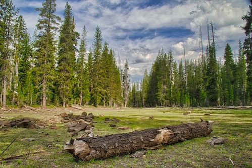 Meadow Near Juniper Lake