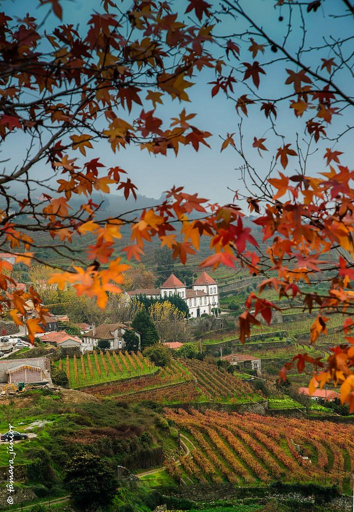 02.- 2015 - Outono no Douro Vinhateiro IIII (130)
