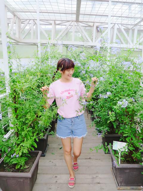 香草菲菲 (35)