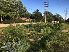 Glendale Community Garden July 2018