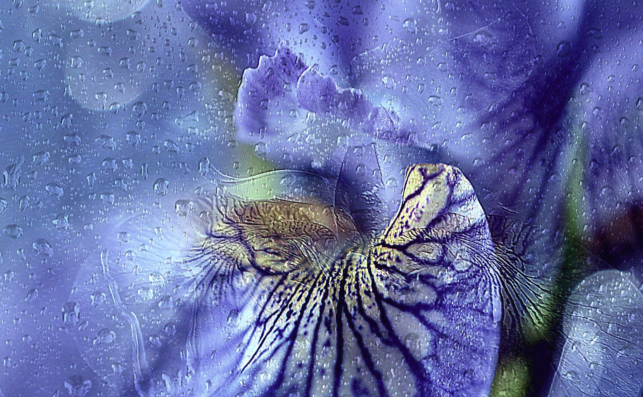 Iris. A Slider :-)