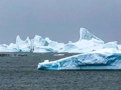 """In """"Iceberg Alley"""" Between Booth and Pleneau Islands, Antarctica 1"""