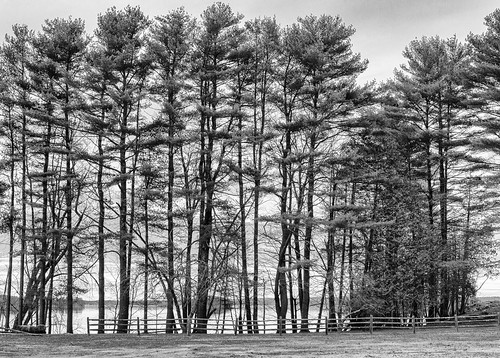 androscoggin river maine topsham bw hff monotone trees fence