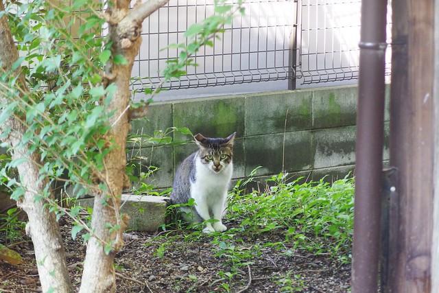 Today's Cat@2018-07-09