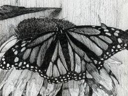 open_butterfly_by_alex_sax