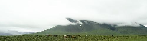 caballos fauna y montañas en ruta Reikiavic a Siglufjordur Islandia 03 fotos tomadas desde un autobus