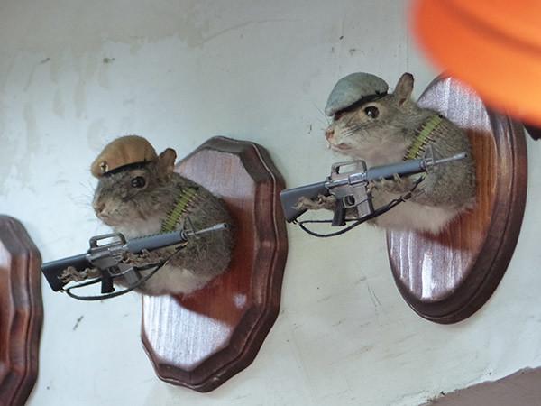 écureuils armés