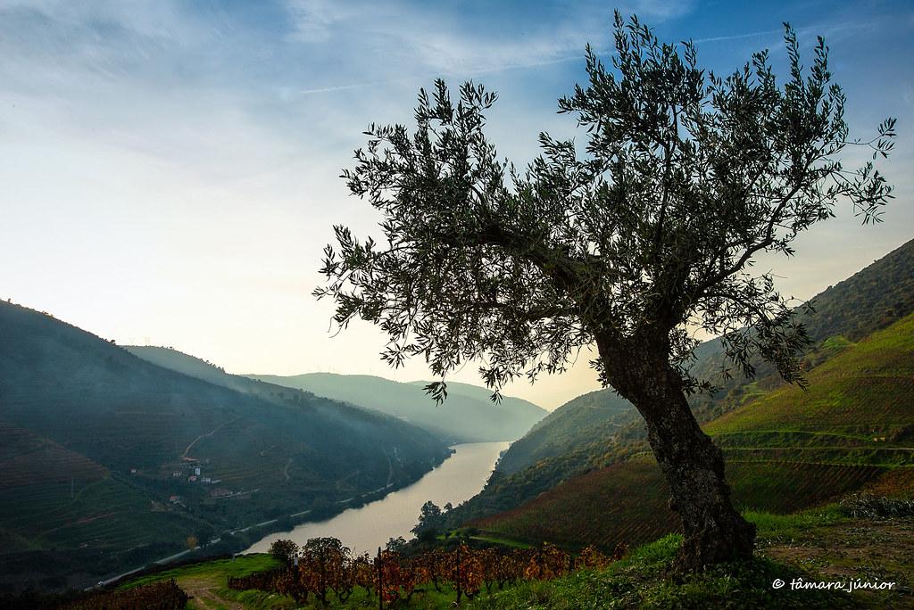 22.- 2015 - Outono no Douro Vinhateiro IIII (447)