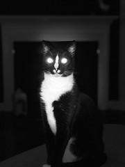 Daemon cat