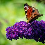 Petit papillon coloré