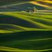 Lone Tree Sunset - Palouse, Washington by Jim Patterson Photography