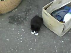 Котёнок у коробки.