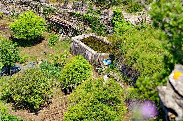 549 - Cap Corse - Nonza, les jardins