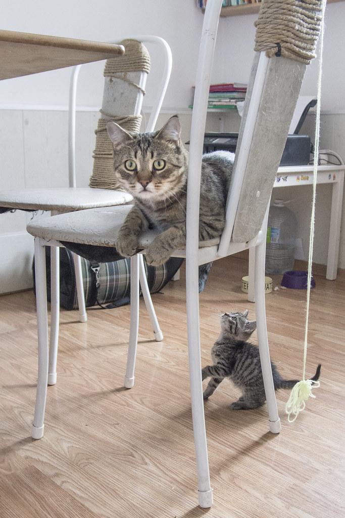 Коты_8