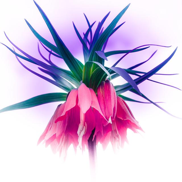 digital floristry!