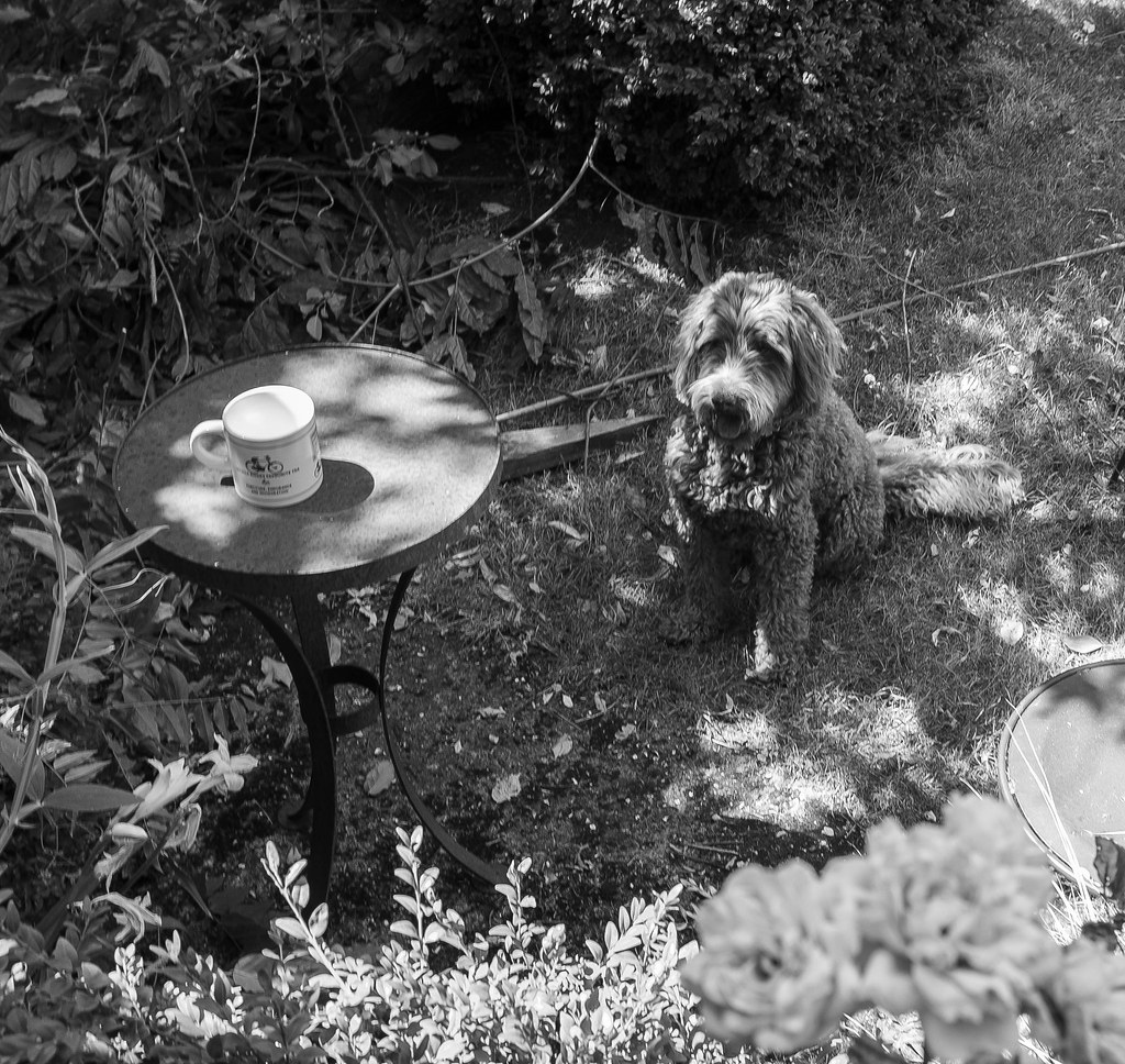 Afternoon Tea with Ewok