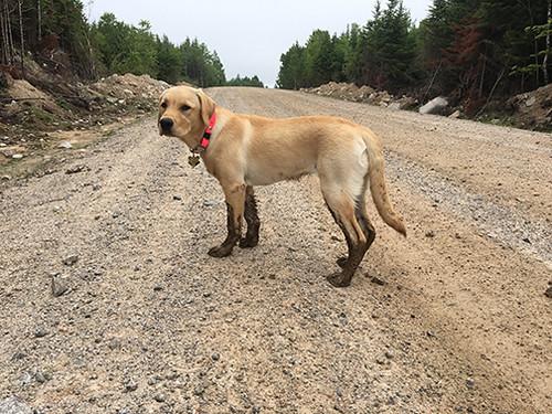 Muddy Isla
