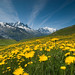 Meadow of Yellow Flowers and Mountains by OneEighteen