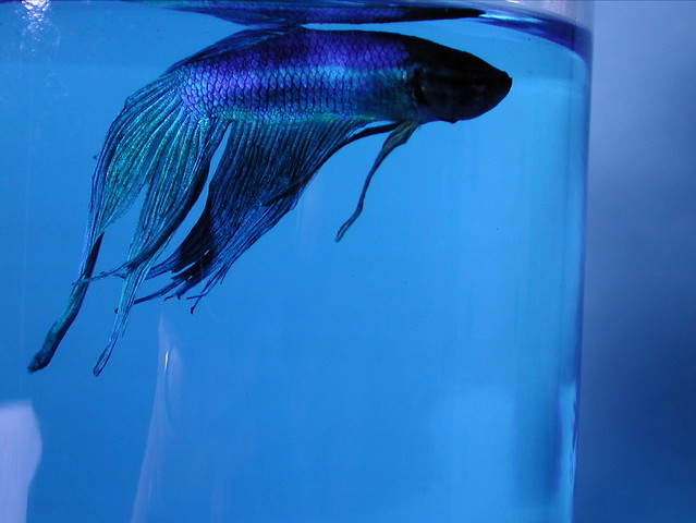 The salty methylene blue therapy flickr photo sharing for Methylene blue for fish