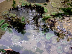 algae, water, nature, marine biology, tide pool, reflection, pond,