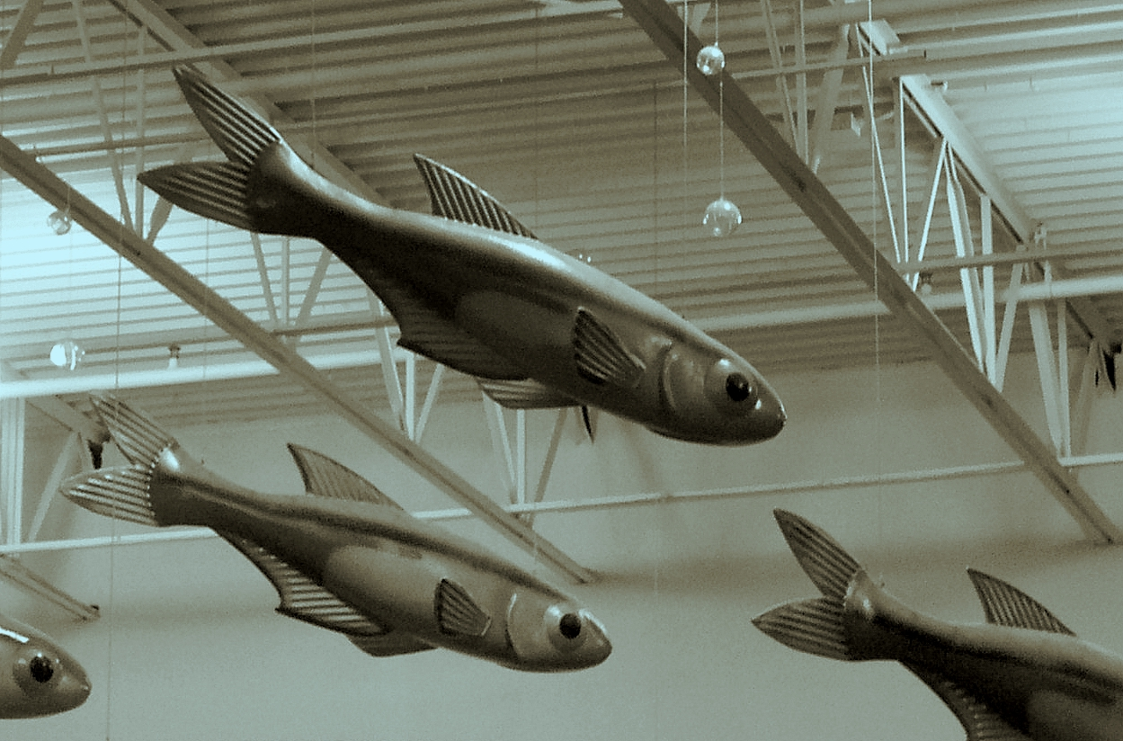 Flying fish hanging from the ceiling of the nearest for Closest fish store