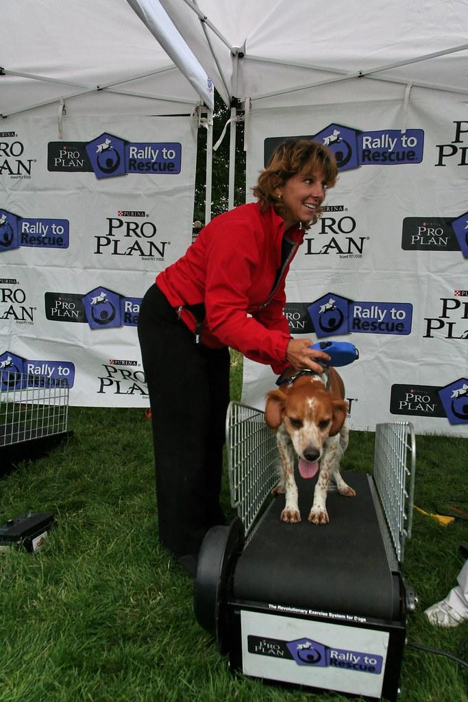 Dog Training Denver Cost