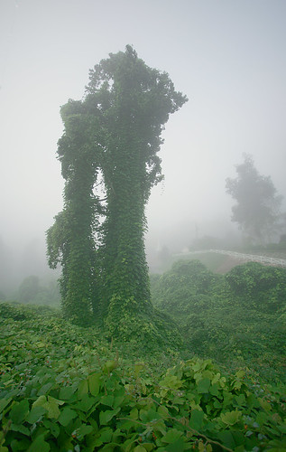trees mist nature fog landscape nebel north vine carolina kudzu invasive zirconia lobata pueraria