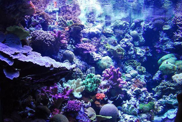 aquarium of the pacific flickr photo