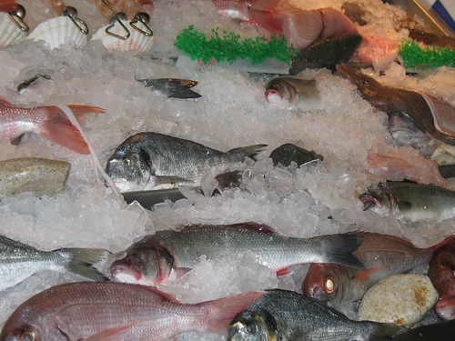 Deep sea fishing san diego fishing charter for San diego deep sea fishing charter