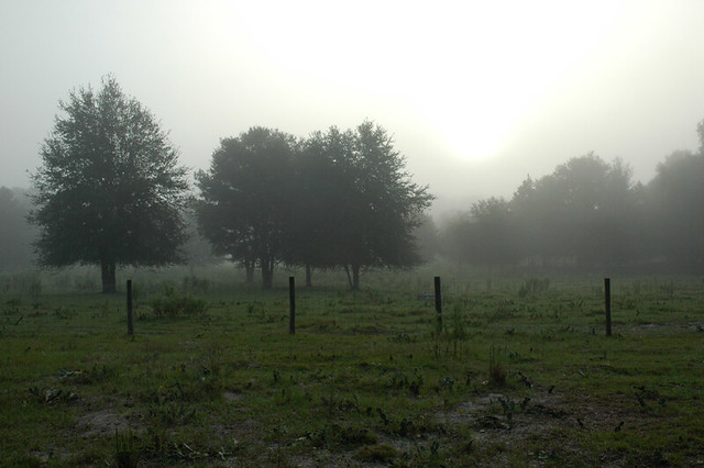 Foggy Dawn, Southern Ranch