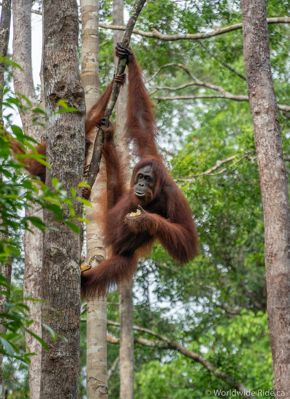 Borneo-44