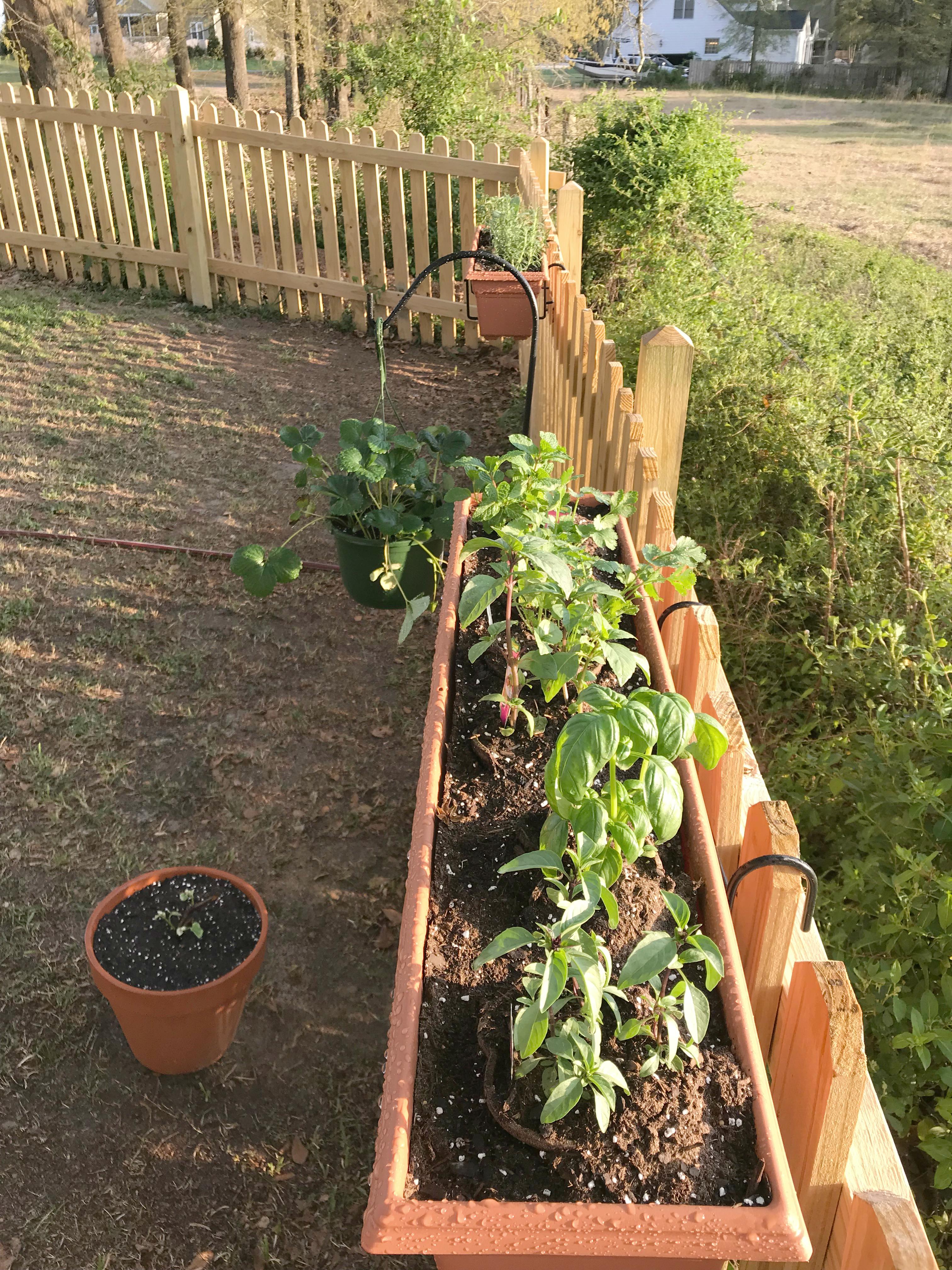 herb garden (44)_2