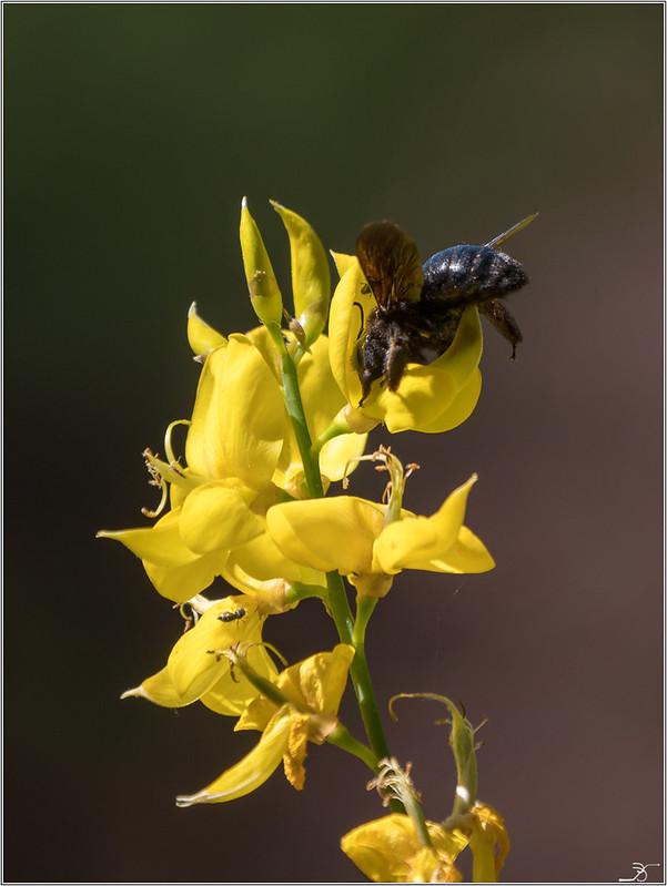 Jardin botanique Saverne: Volants 41279438210_035f64a740_c