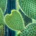 Glowing Heart by Judi FitzPatrick Studio