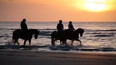 Horses @ sea