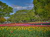 Photo:チューリップの花園で VIII By jun560