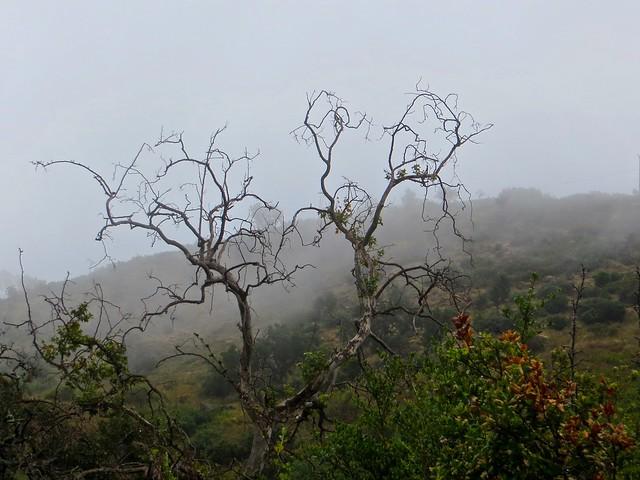 fog rolls through