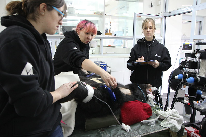 Animals Asia's vets are doing health check for Jingle