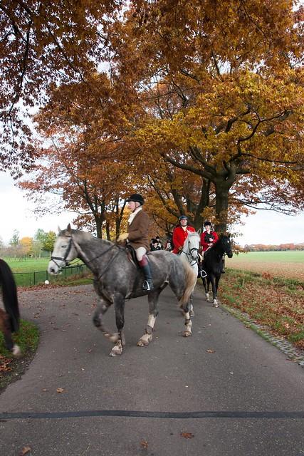 Midland Hunt Landhorst 2015-9159