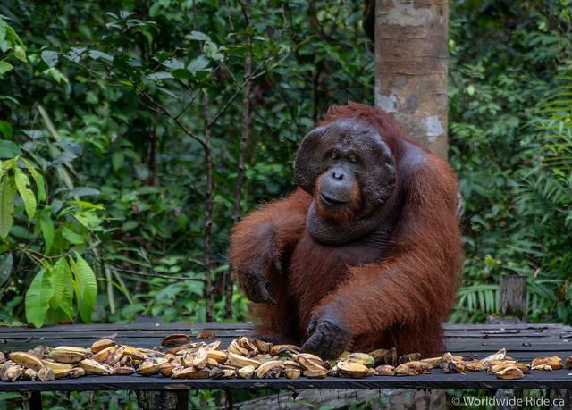 Borneo-34