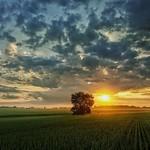 15. Juuli 2018 - 5:10 - Sunrise. Field.