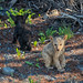 Bear Cub Cuteness by Philip Kuntz