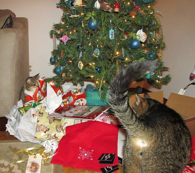 Christmas 2014 with cats, Canon POWERSHOT SX160 IS