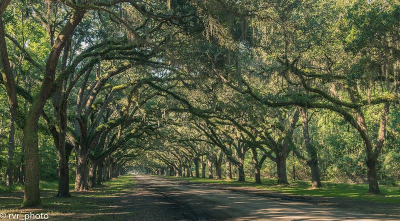 Wormsloe Oak Plantation - Savannah