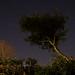 Neighborhood Nights (Slow return)