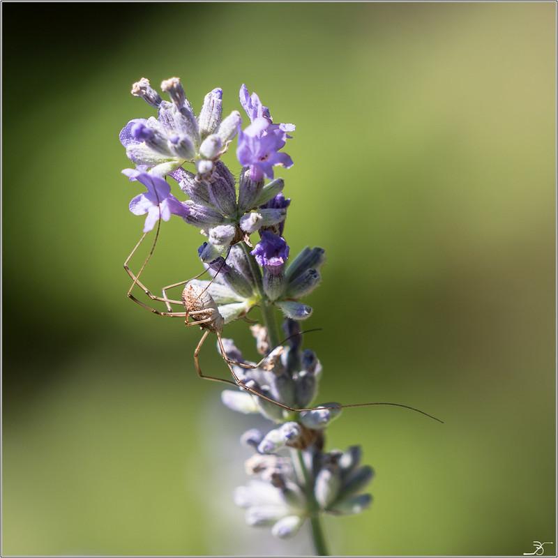 Jardin botanique Saverne: Rampants et fleurs 29218534858_2552eb59b2_c