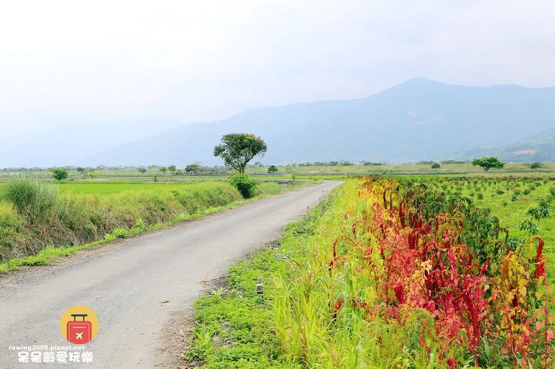 《花蓮。遊》 玉里天堂路 蜿蜒小徑碗如通往天際的神祕通道